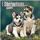 Siberian Husky Puppies 2014 - Husky-Welpen: Original BrownTrout-Kalender [Mehrsprachig]...