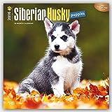 Siberian Husky Puppies 2016 - Husky-Welpen - 18-Monatskalender mit freier DogDays-App:...