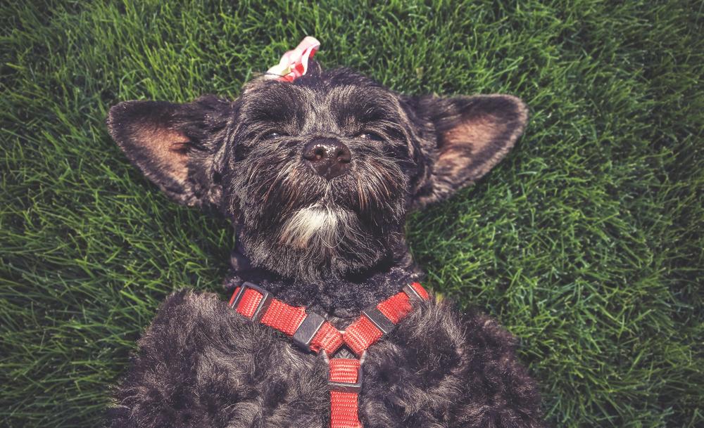 Welpengeschirr für Hunde