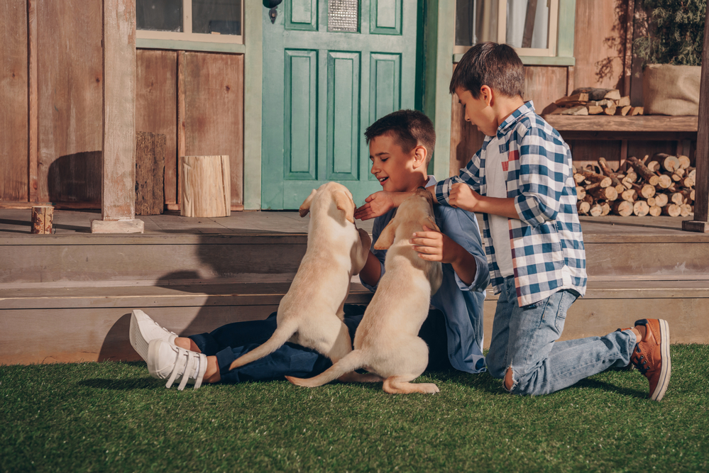 Jungs spielen mit Labrador Welpen