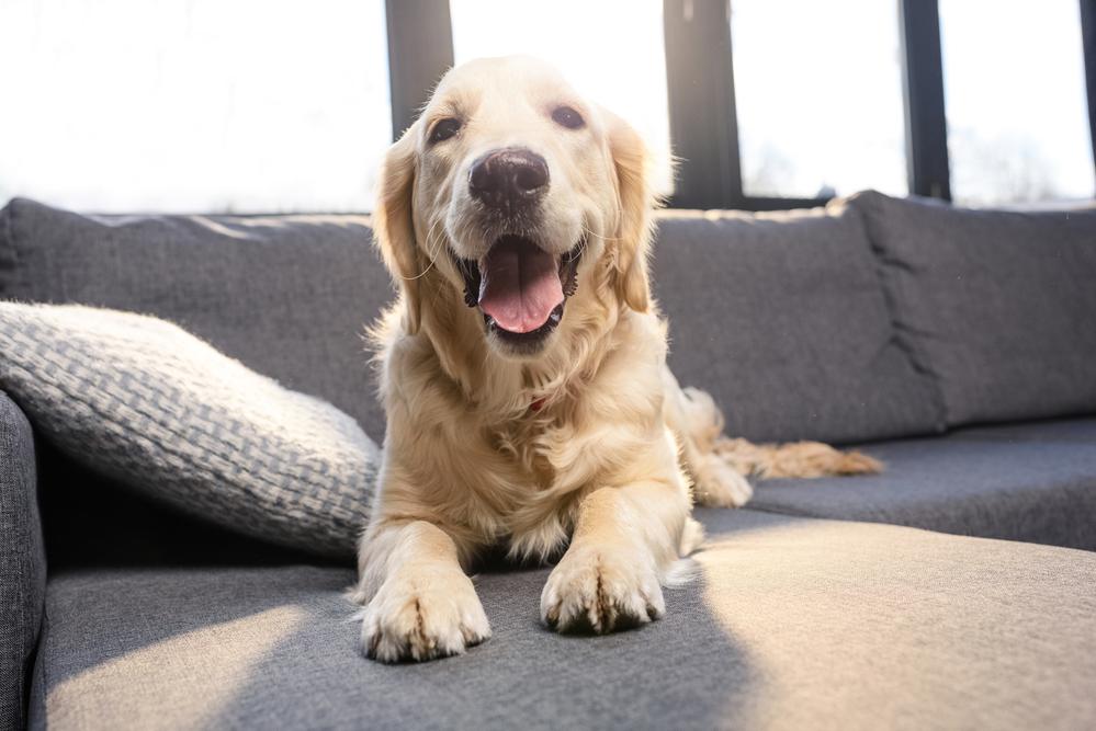 Hund als Haustier ja oder nein?