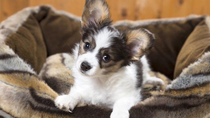 Hundecouch XXL: Großes Hundesofa für den Hund!