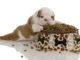 Wie kann man einen Hundewelpen richtig ernähren?