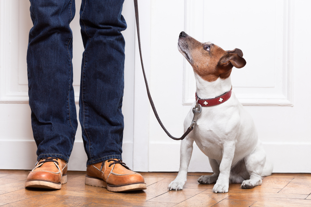 Hundeerziehung ohne Stress: Eine Einführung