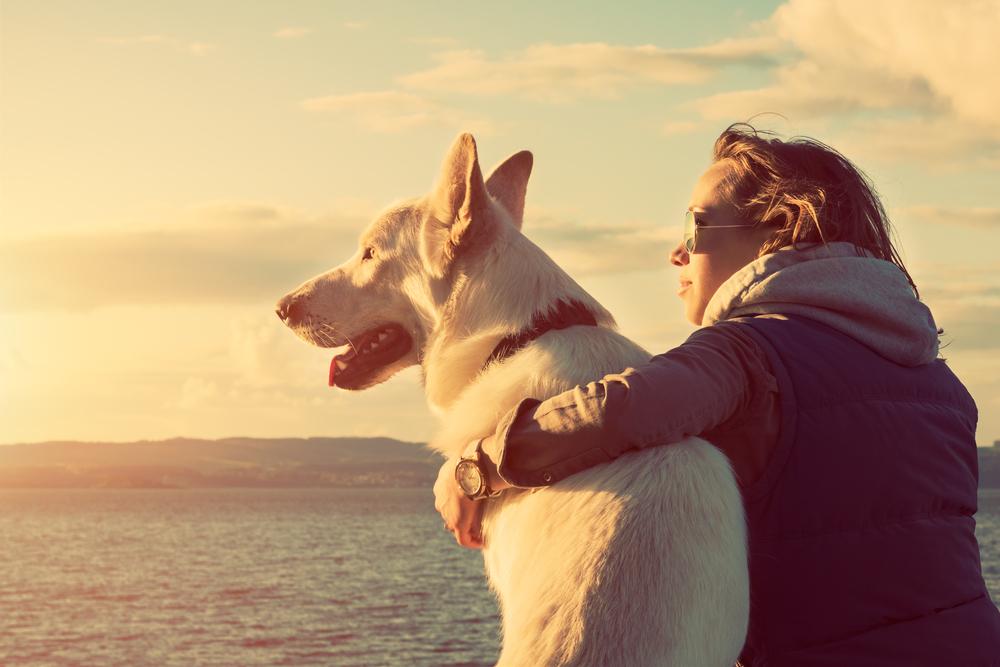 Pflegeleichte Hunderassen