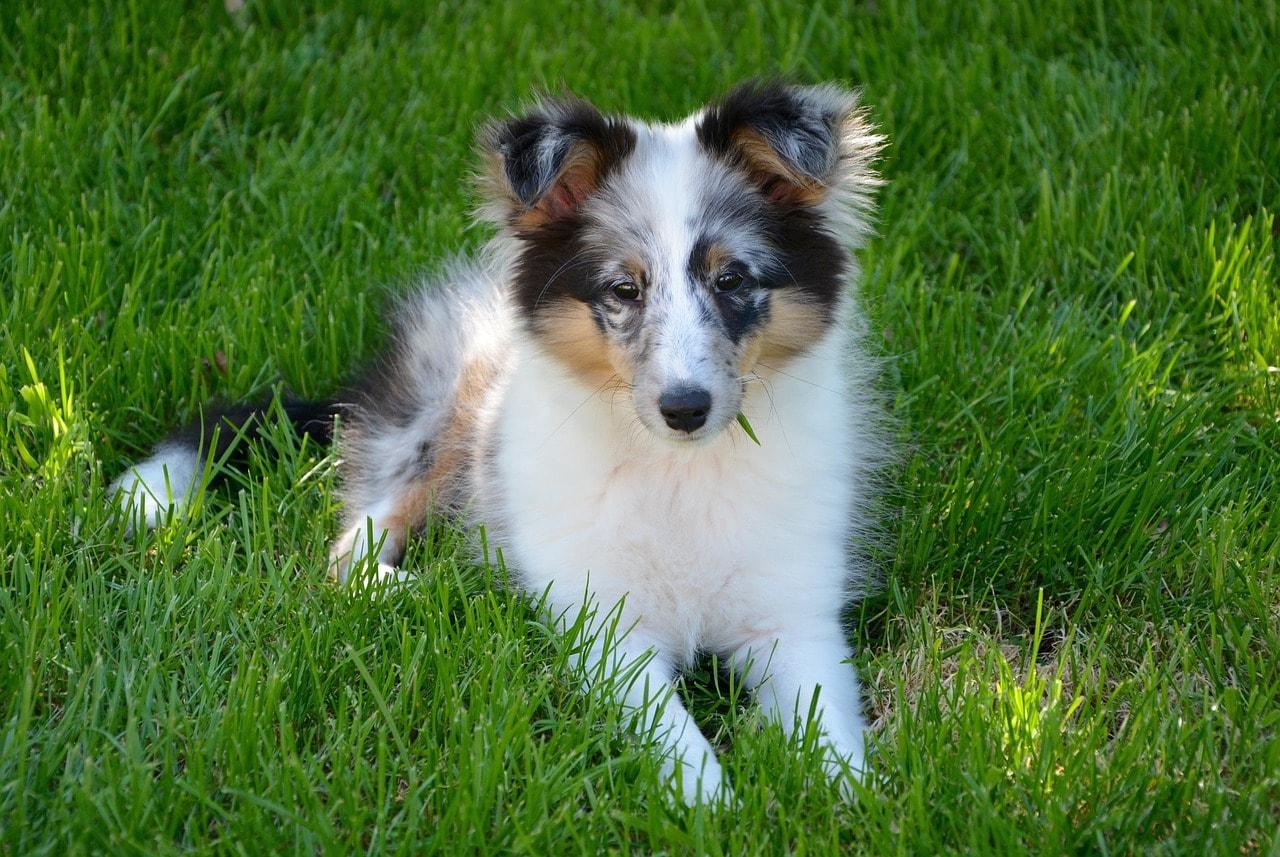huebscher-welpe-hund-doggo