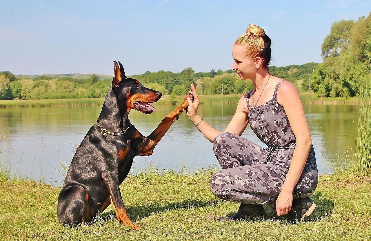 hund-frau-high-five
