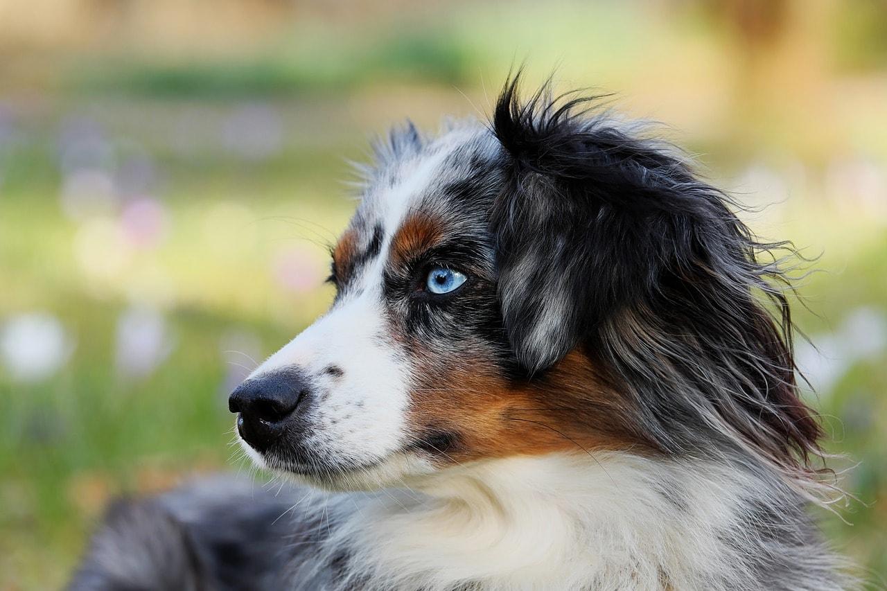 hund-natur-draussen