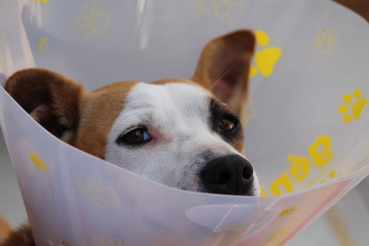 hund-schaut-traurig-verletzt2