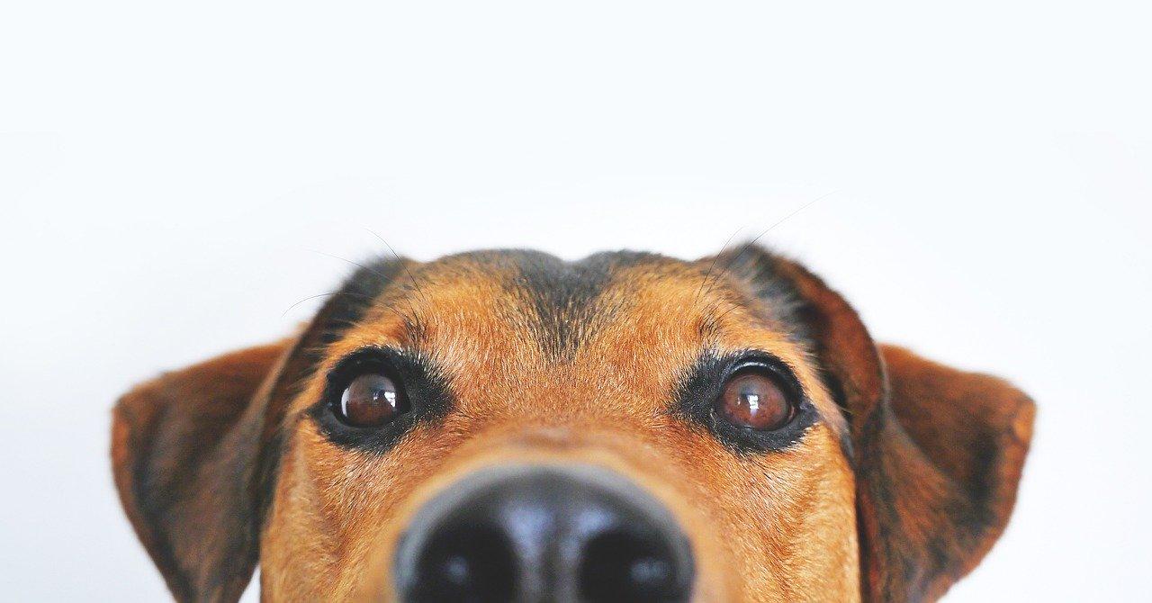 hundefuehrerschein-ratgeber