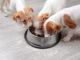 Drei lustige Hunde beim Fressen